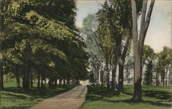 Lovers Lane in Union College Grove Postcard