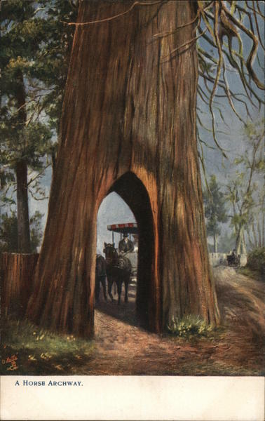 A Horse Archway Trees
