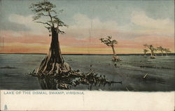 Lake of the Dismal Swamp Postcard
