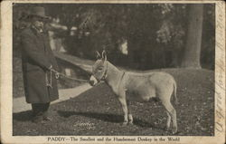 Paddy the Donkey