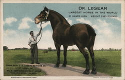 Dr. Legear, Largest Horse in the World Postcard