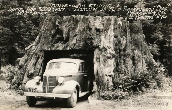 Drive-Way Stump at The Redwood Shop