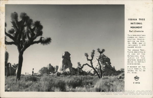 View of Joshua Tree National Monument California