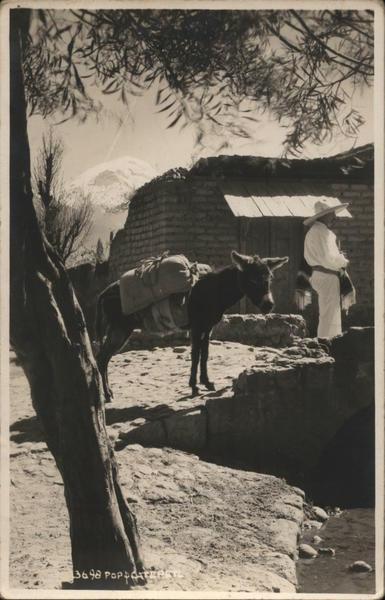 Loaded Burro Donkeys