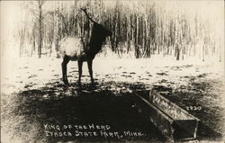 King of the Herd, Itasca State Park, Elk
