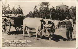 Duke and Dude Pageant Oxen, Chas Davis Driver, Itasca State Park Postcard