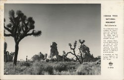 View of Joshua Tree National Monument