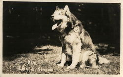 Sled Dog, Chinook Kennels