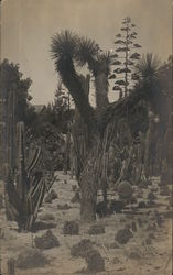 Forest of Cactus