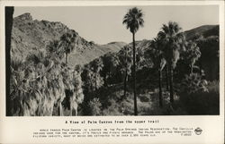 Palm Canyon Indian Reservation from the Upper Trail