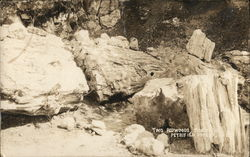 Two Petrified Redwoods, Side by Side Postcard