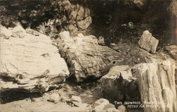 Two Redwoods, Side by Side, Petrified Forest National Park Postcard