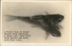 Two Headed Trout Mount Shasta, CA Postcard