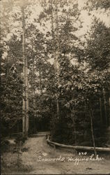 Pinewoods, Higgins Lake