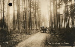 The Road Through the Pines Postcard