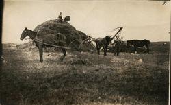 Horses Hauling Hay