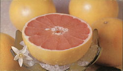 Florida Pink Grapefruit (Oct. to May), Mixon Fruit Farms, Inc.