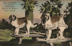 St.Bernard Mascots of Springborg's Glen Ivy Hot Springs