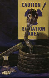 Miami Serpentarium Cobra Postcard