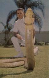 King Cobra, Miami Serpentarium