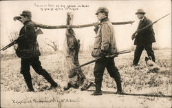 Hunters Bringing Home Huge Rabbit Postcard