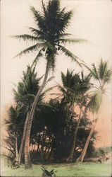 Coconut Palm, Tinted