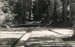Theater in the Redwoods, Armstrong Grove