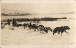 Transporting US Mail in Alaska with dogs Postcard