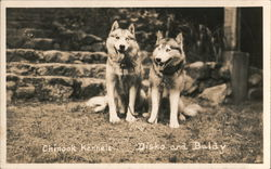 Disko and Baldy, Chinook Kennels Postcard