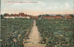 Wine Cellars, Italian Swiss Colony Postcard