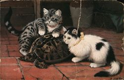 Two cats and a turtle