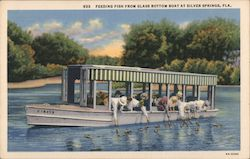 Feeding fish from glass bottom boat Postcard