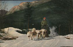 Ed Clark's Eskimo Sled Dogs in Action Postcard
