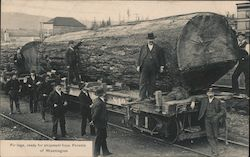 Fir Logs, Ready for Shipment from Forests of Washington