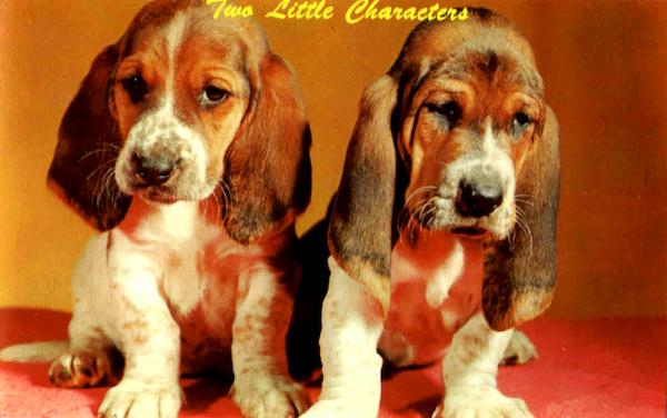 Basset Pups Dogs