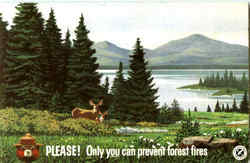 Please Only You Can Prevent Forest Fires Postcard
