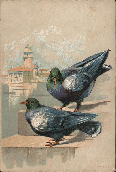 A Pair of Pigeons Birds