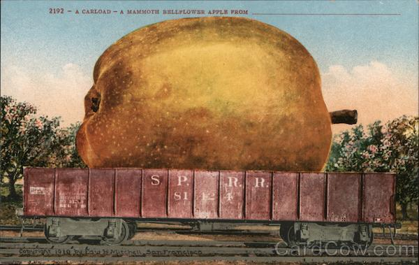 A Carload-A Mammothe Bellflower Apple From__ Exaggeration