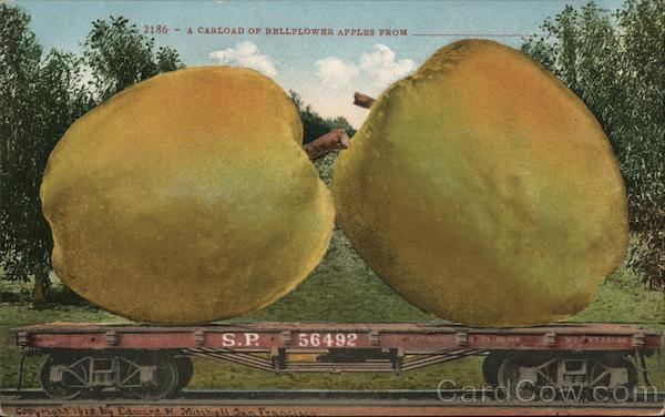 A Carload of Bellflower Apples From___ Exaggeration