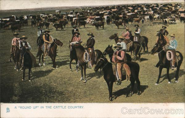 A Round Up in the Cattle Country Cowboy Western