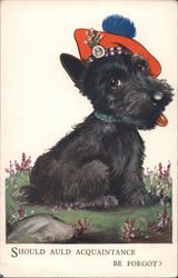 A Black Scottish Terrier with Hat