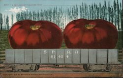 A Carload of Tomatoes From_______