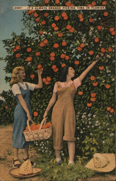 It's Always Orange Picking Time in Florida