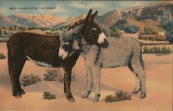 Romance on the Desert - Two Donkeys