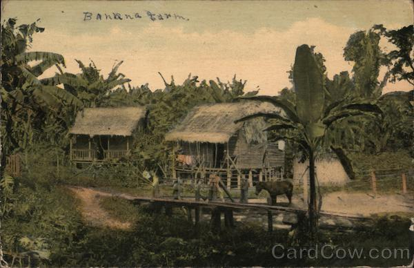 A Chinese Farmer's Banana Plantation on the Banks of the Canal Panama