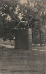 Catamount in Bronze Postcard