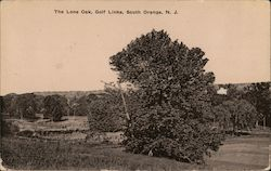 The Lone Oak, Golf Links Postcard