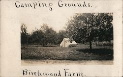 Camping Grounds, Birchwood Farm