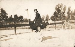 Woman Riding Ostrich Postcard