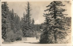 Near Troutdale in the pines Postcard